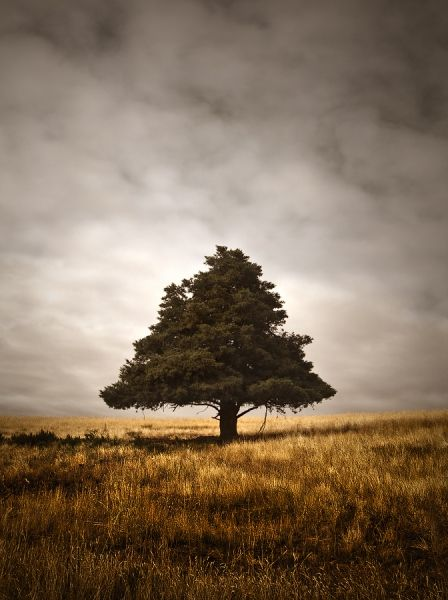 Lone Bothwell Tree, TAS - Current Work - Gallery - Natural Australian Landscape Images - inspirational images of Australia's natural wildern...