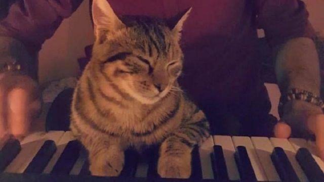 Ο Τούρκος μουσικός Sarper Duman παίζει μια από τις συνθέσεις του στο πιάνο παρέα με την αξιολάτρευτη γάτα του. Το μικρό ζώο φαίνεται να είναι εντελώς μαγεμένο από την απαλή μουσική και τρίβεται με αγάπη στο αφεντικό του, πριν ξαπλώσει […]