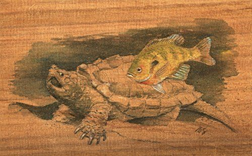 Bluegill fish and snapping Turtle Cedar Watercolor 8X10 Best Cottage or Lake House Decor Art Print by Fisherman artist Barry Singer. This print from an original watercolor by Barry Singer has a 1.25 inch white border. It's ready to pop into a standard 8 X 10 frame. It depicts a rather nasty snapping turtle and a common bluegill. The original was painted on cedar. Using acid free heavy natural stock and brilliant high quality inks, it will last a lifetime. Scanned at high resolution it…