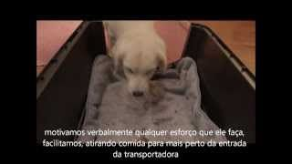 Crate training Claudia Estanislau - YouTube