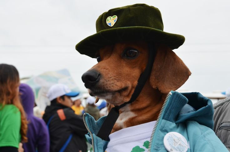 A Carioca Dog waiting Pope Francis on the Copacabana seafront