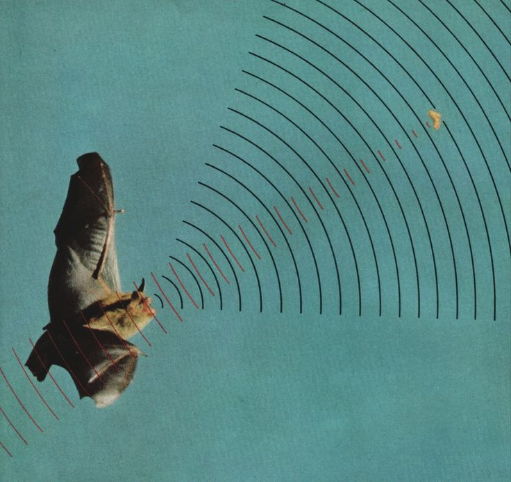 """Image by Lincoln Laboratory, MIT. From """"How Bats Hunt With Sound,"""" National Geographic, April, 1961. """"Hungry bat broadcasts signals that bounce back from target Tiny larynx emits up to 200 beeps a second as the brown bat homes in on an insect. Big..."""