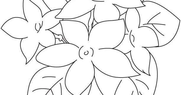 Wow 16 Gambar Bunga Melati Mudah Koleksi Terbaik Sketsa Gambar Bunga Melati Halaman Mewarnai Bunga Melati Beberapa Langkah Mudah Di 2020 Bunga Menanam Bunga Gambar