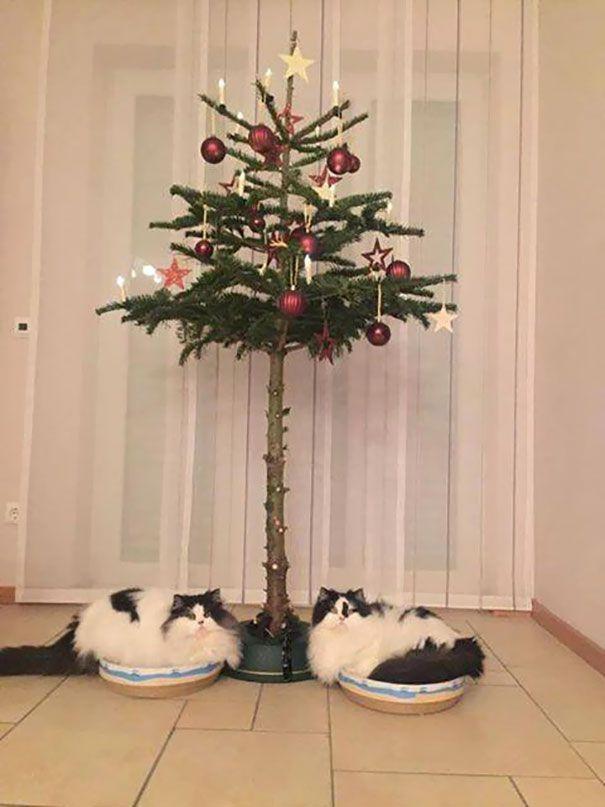 20 génies de Noël qui sont parvenus à sauver leur sapin des assauts impitoyables de leurs chats et de leurs chiens