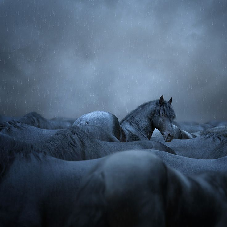 Rule breaker / the dramatic photography of Caras Ionut