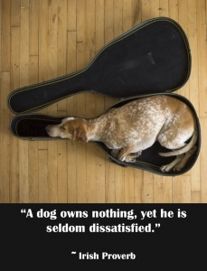 """""""A dog own nothing, yet he is seldom dissatisfied.""""  ~ Irish Proverb"""