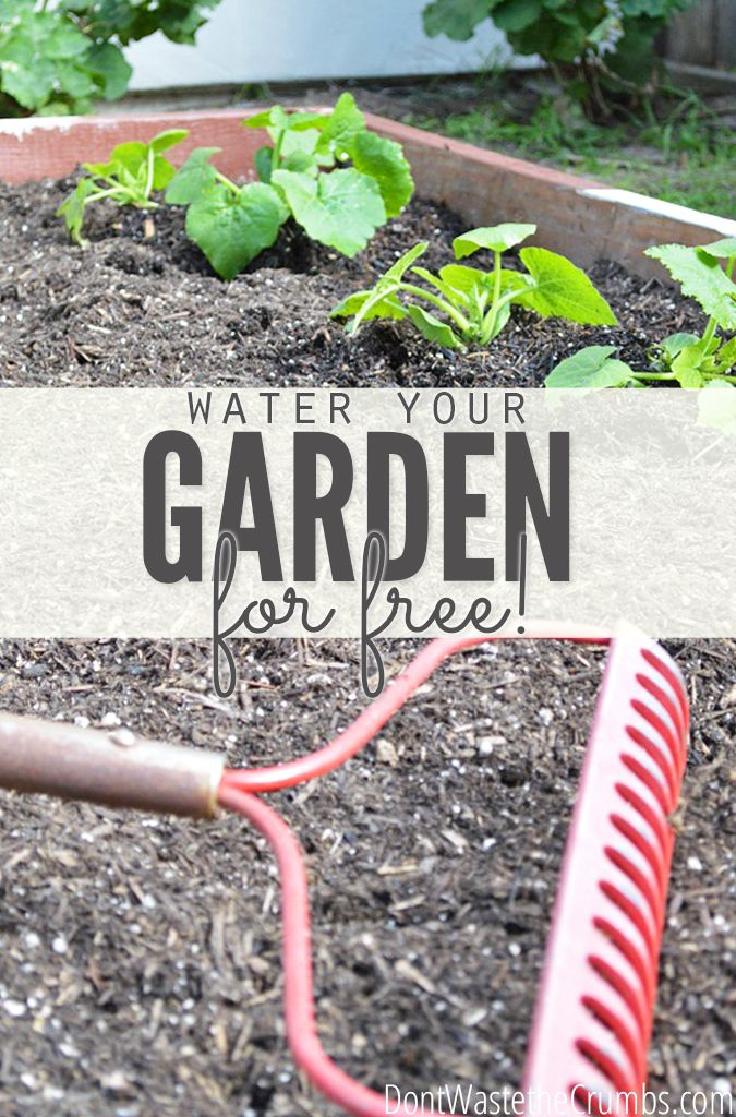 Paying for water defeats the purpose of saving money while gardening. Learn how to water your garden for free with these awesome gardening hacks! :: DontWastetheCrumbs.com