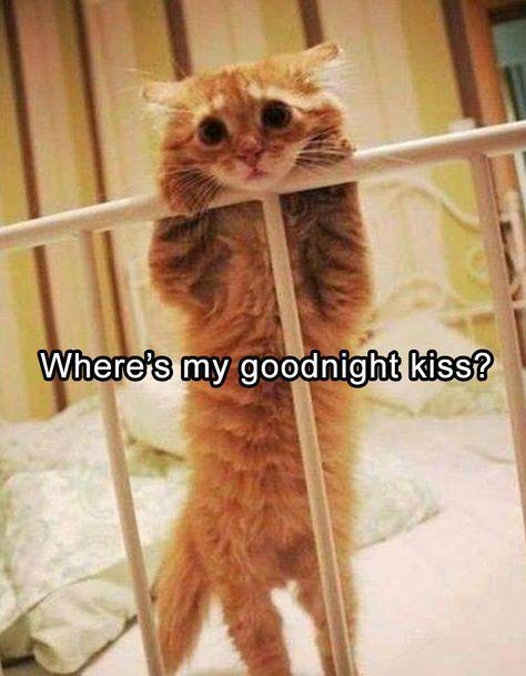 Where's my goodnight kiss?