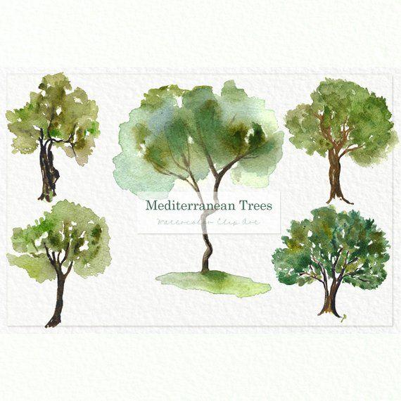 Mediterranean Trees Watercolor Clip Art Digital Watercolours