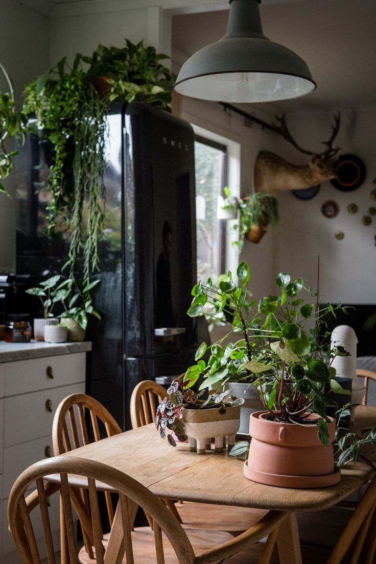 Urban jungle living at its best in 1870s worker's cottage