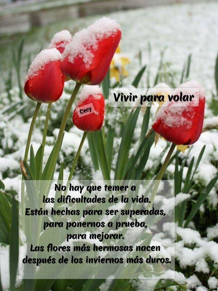 No hay que temer a las dificultades de la vida. Están hechas para ser superadas, para ponernos a prueba, para mejorar. Las flores más hermosas nacen después de los inviernos más duros. ❤️