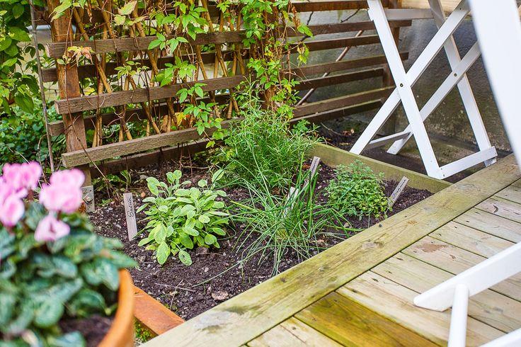 Kryddträdgård örter salvia rosmarin uteplats