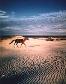 Cumberland Island, Georgia. Cumberland Island is designated the Cumberland Island National Seashore by the National Park Service, and, as such, is preserved and protected from development.    The daily visitor rate is limited, ensuring a tranquil setting for the island's population of wild horses, deer, bobcat, boar, turkeys, armadillos and birds.