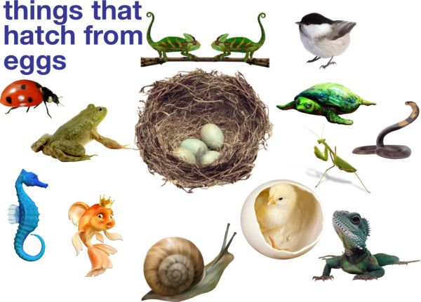 Image result for animals that come from eggs