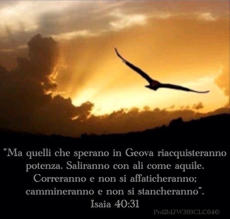 """Ma quelli che sperano in Geova riacquisteranno potenza. Saliranno con ali come aquile. Correranno e non si affaticheranno; cammineranno e non si stancheranno"""". Isaia 40:31"""