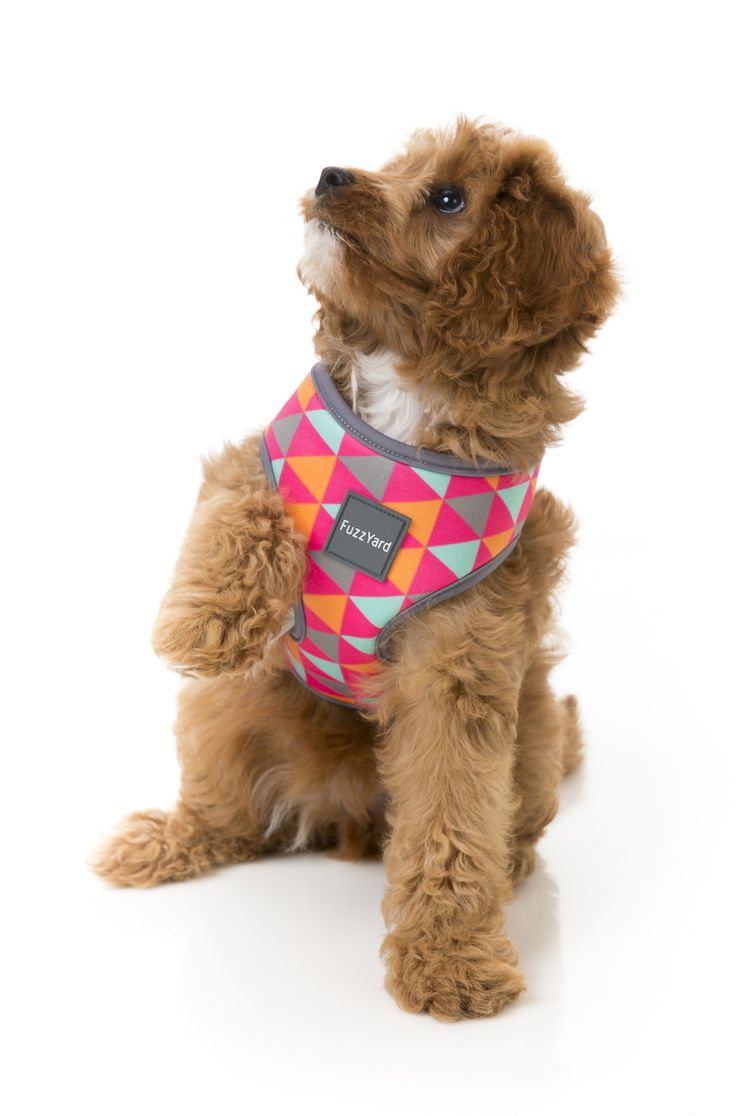 FuzzYard Crush Dog Harness
