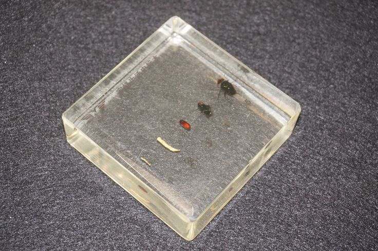 Life Cycle Of The Housefly Specimens In Clear Lucite Educational Equipment