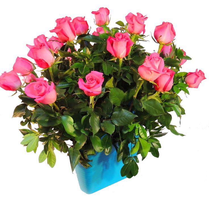 Canasta de rosas: Una espectacular canasta Elho grande con dos docenas de rosas. Verifica disponibilidad de rosas en floristería. Solicítalo ya: Teléfono +571 2159030 o al correo electrónico clientes@lapetala.com.    Cómpralo en nuestra página www.lapetala.com