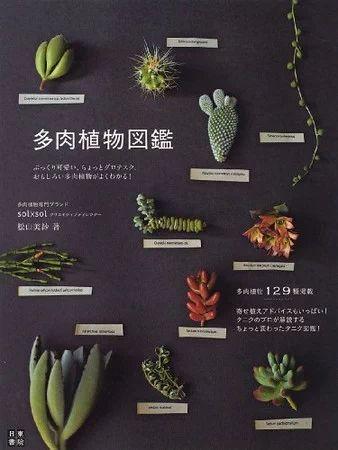 """""""多肉植物図鑑"""" https://sumally.com/p/448313"""