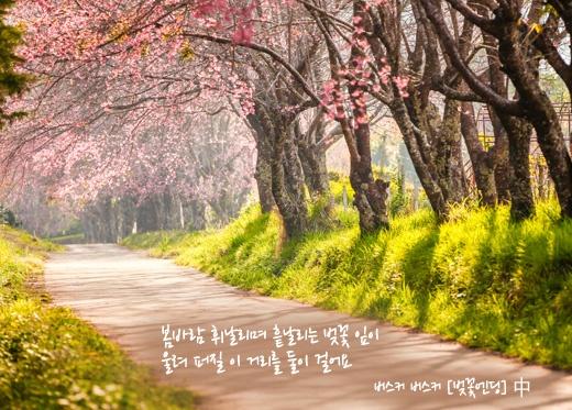 Cherry blossom Ending_벚꽃엔딩 @SK telecom