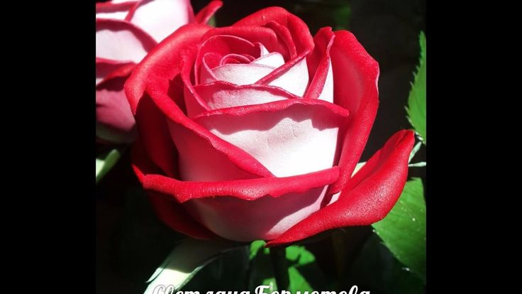 Роза Осирия из китайского фоамирана.