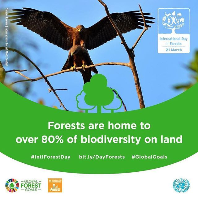 Today is International Day off Forests (23 March)