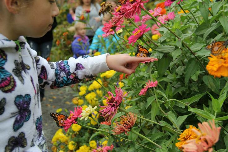 31 Best Images About Butterfly Release Event On Pinterest Gardens Monarch Butterfly And The O