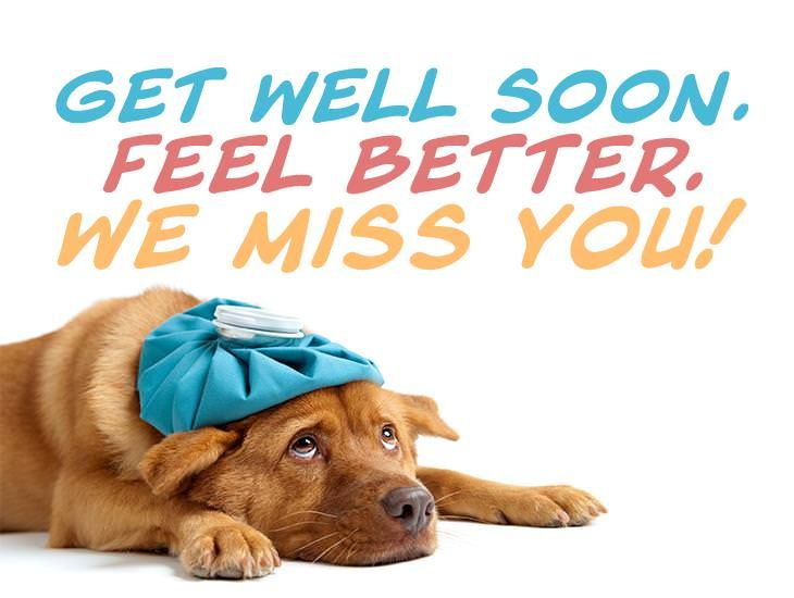 Get Well Soon Feel Better We Miss You Get Well Feel Better Quotes Get Well Quotes