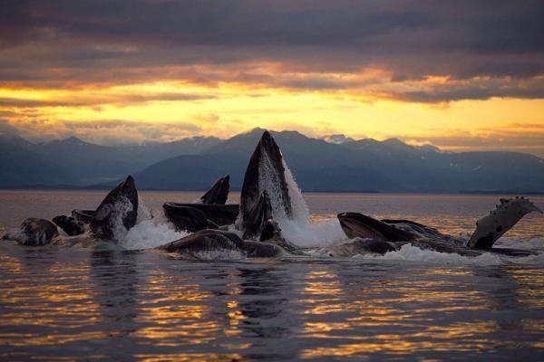 Aww... Whales having fun!  <3