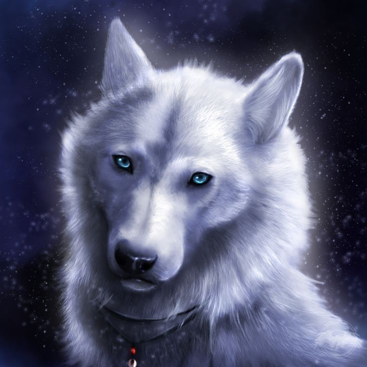 Pin By Wiktor Slonina On Spirit Of The Wolf Wolf Artwork Wolf Wallpaper Wolf Painting