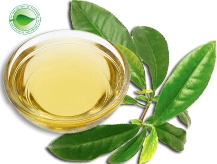 http://www.subtelnepiekno.pl/olej-zielonej-herbaty-100-ml-p-198.html  Olej (macerat) z Zielonej Herbaty.  Polecany jest w pielęgnacji każdego typu cery, zarówno tłustej i trądzikowej, dojrzałej, naczyniowej oraz cery suchej podatnej na podrażnienia. Jest lekki, szybko wchłania się w skórę.