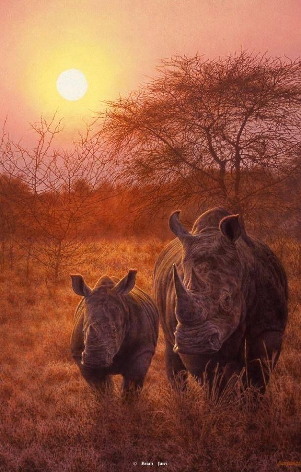 White Rhino's
