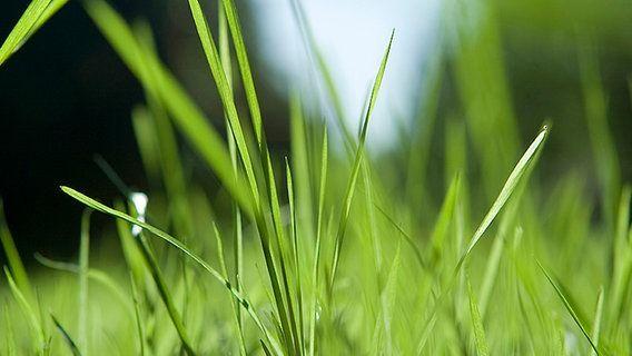 Ndr Fernsehen Aktuell Regional Norddeutsch Rasen Garten Bepflanzen Unkraut Im Rasen