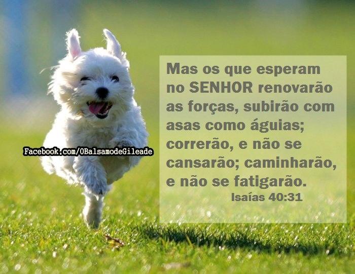 Mas os que esperam no SENHOR renovarão as forças, subirão com asas como águias; correrão, e não se cansarão; caminharão, e não se fatigarão.  Isaías 40:31