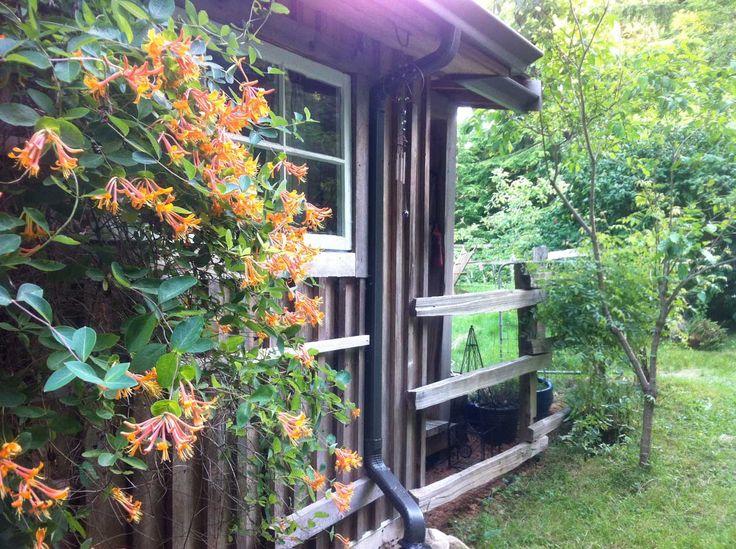 48 best landscape camo images on pinterest yard ideas for Modern homesteading