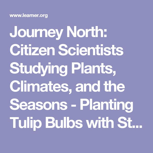 Journey North: Citizen Scientists Studying Plants, Climates, and the Seasons - Planting Tulip Bulbs with Students