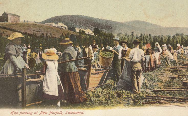 historic australian postcard