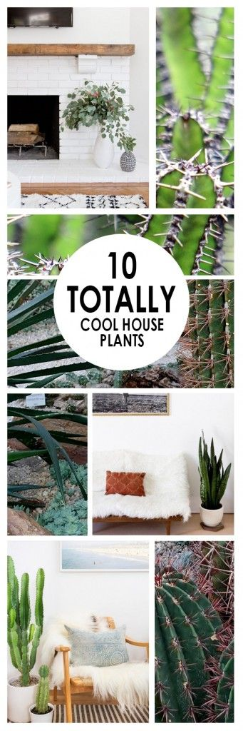 House plants, how to grow house plants, popular pin, plants, gardening, gardening hacks, easy to grow plants.