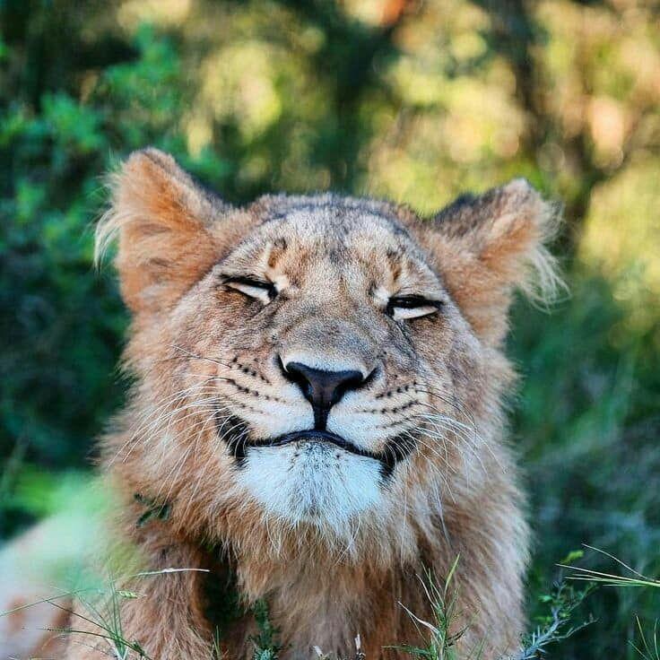 Https Www Facebook Com Photo Php Fbid 148219269504353 Lachelnde Tiere Tiere Wild Ausgestopftes Tier