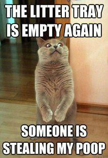 Our funny cat pictures will make you laugh. Cats will do something cute and or funny throughout the entire day. We have some of these hilarious moments