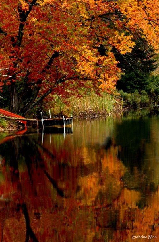 Folhagem dourada no outono da Nova Inglaterra, USA.