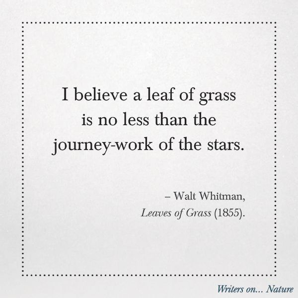 I believe a leaf of grass is no less than the journey-work of the stars. - Walt Whitman, Leaves of Grass (1855). Quotes about Nature from the Book, Writers on Nature.