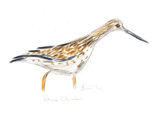 Greater Yellowlegs by Zanimo on Etsy