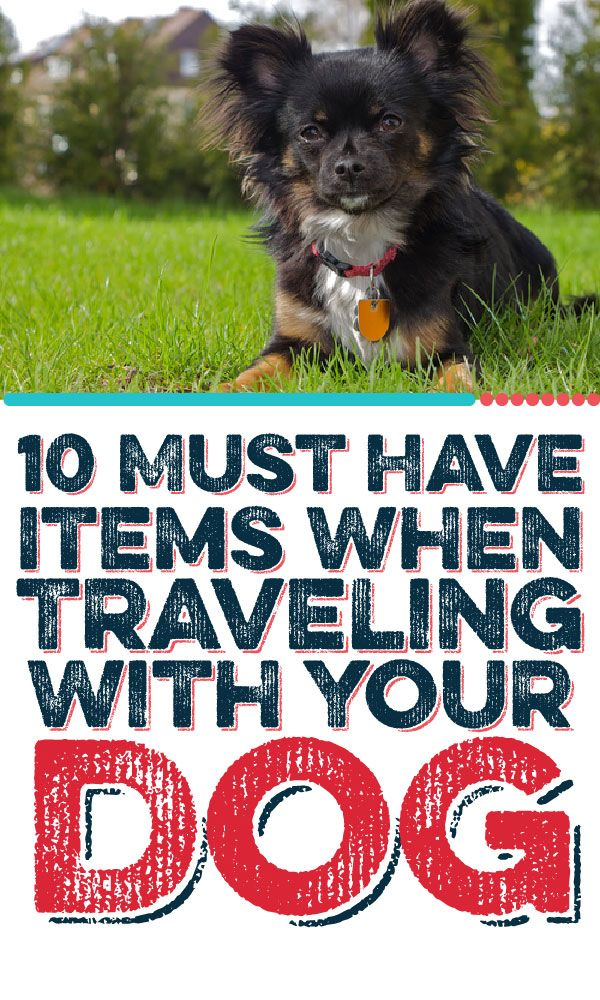 Love to travel with your dog? Here are 10 MUST HAVE items to make your trips easier!