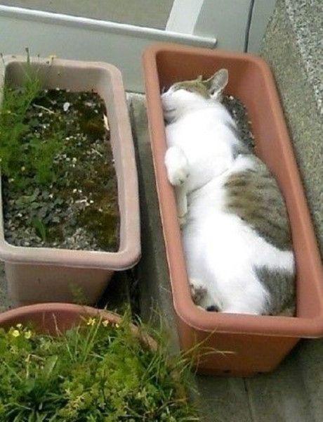 sleeping cat in flower pot