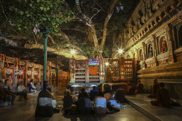 Bodh gaya buddha's tree, Bihar, India