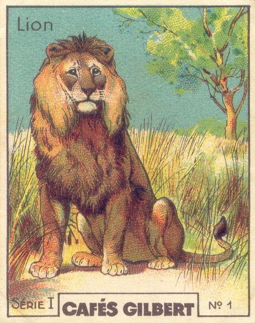 DA VEDERE TUTTO L'ALBUM. Luoghi esotici, animali, mezzi di trasporto, esplorazioni - gilb lion by pilllpat (agence eureka), via Flickr