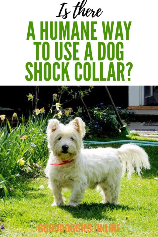 Humane Shock Collars for Dogs