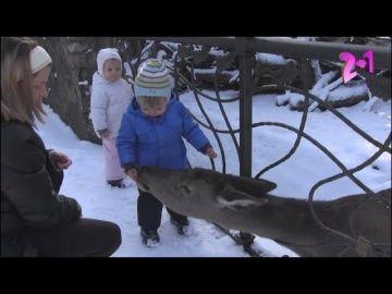 Наш АРХИВ... МАЛЫШИ В ГОСТЯХ У ЖИВОТНЫХ http://video-kid.com/16578-nash-arhiv-malyshi-v-gostjah-u-zhivotnyh.html  Видео из архива. О том, как мы общаемся с оленями и ежиком-))**************************************Наш канал рассказывает о нашей жизни с самого рождения наших двойняшек.Мы будем с вами и расскажем все начиная от нашего рождения двойни...близнецам (близняшкам) это будет так же интересно!We will be with you and tell you everything from our twins ... Gemini (twins) it will also be…