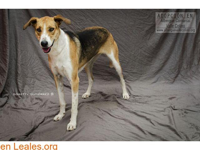 Flecha Adoptada Albergue Valle Colino Perros En Adopcion Valle Perros